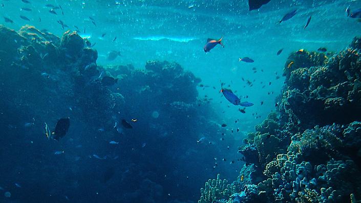 Ocean Cinematic Creator Pack